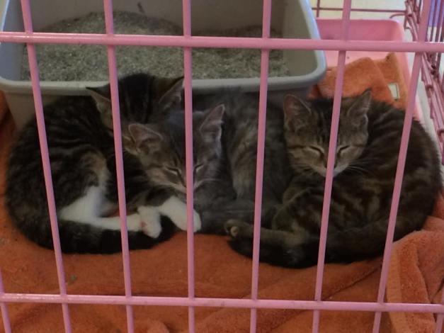 HS kittens 5.22.15