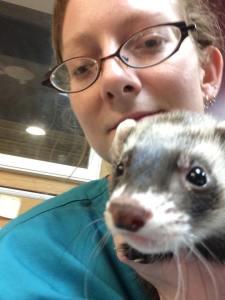 Humane Society ferret
