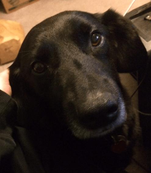 Loki cute eyes